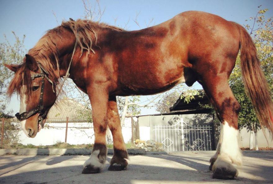 Mustang - фото обои на рабочий стол, картинки