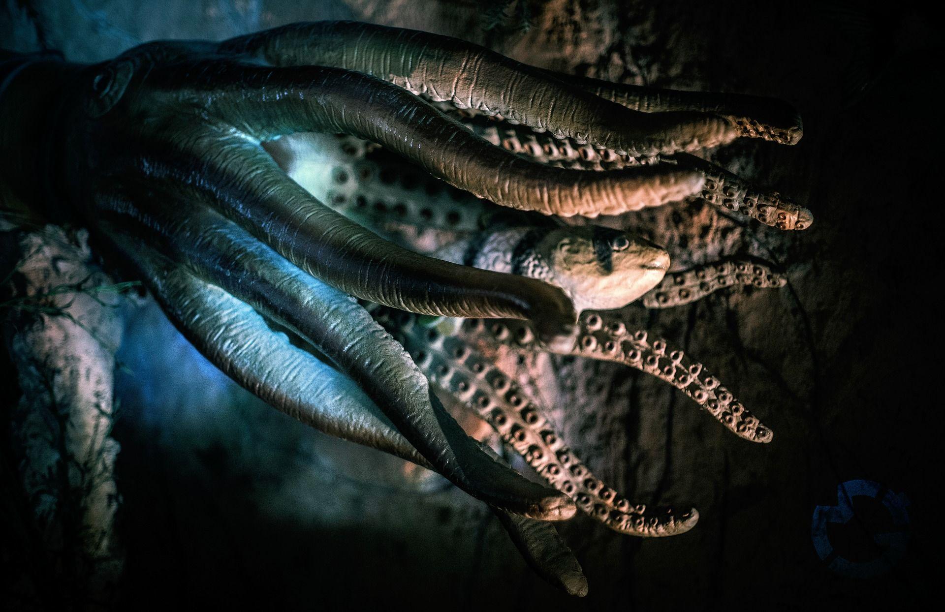 Фото осьминога в хорошем качестве