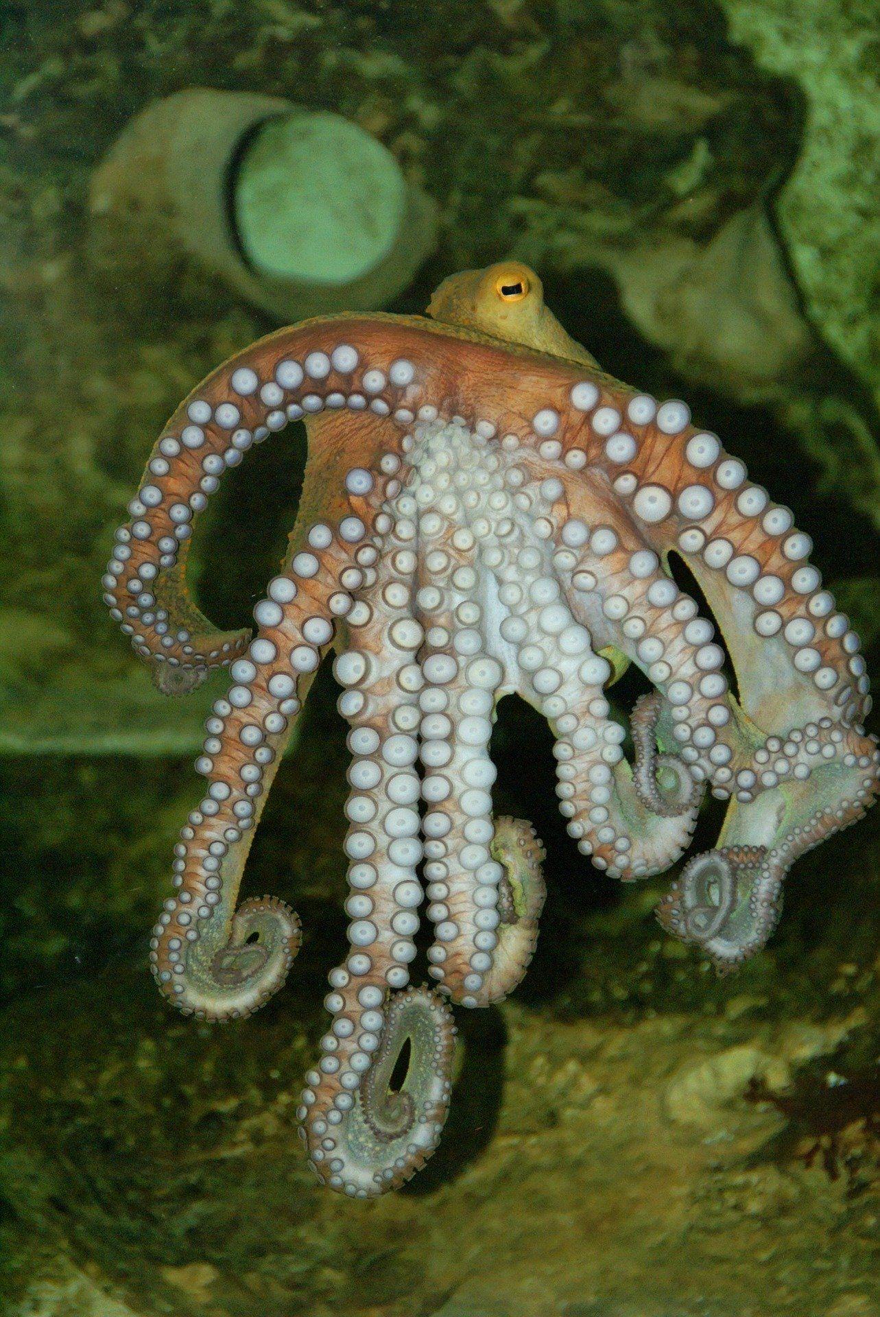 Лучшие фото осьминога бесплатно