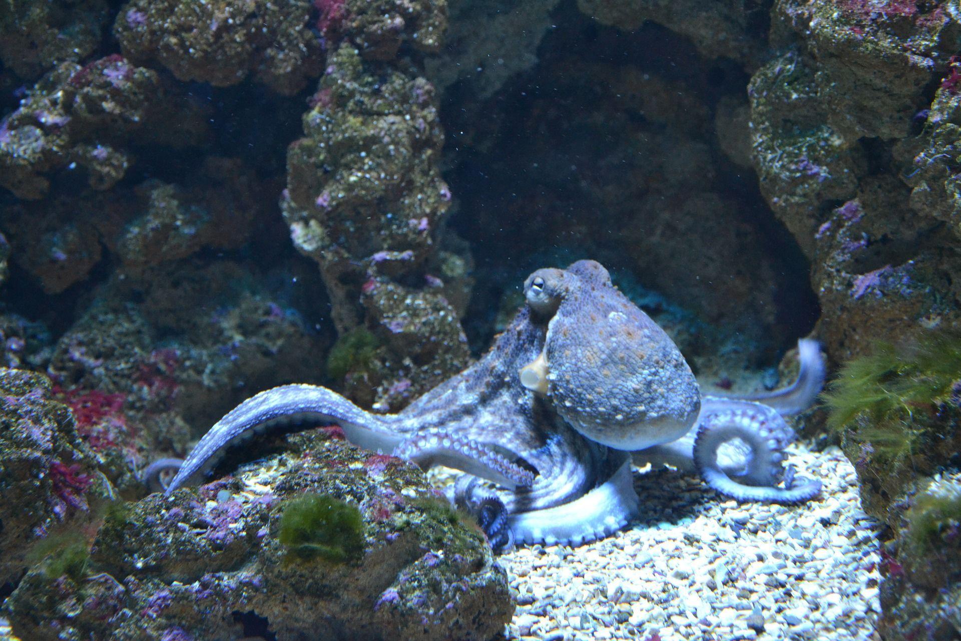 Огромный осьминог, смотреть фото
