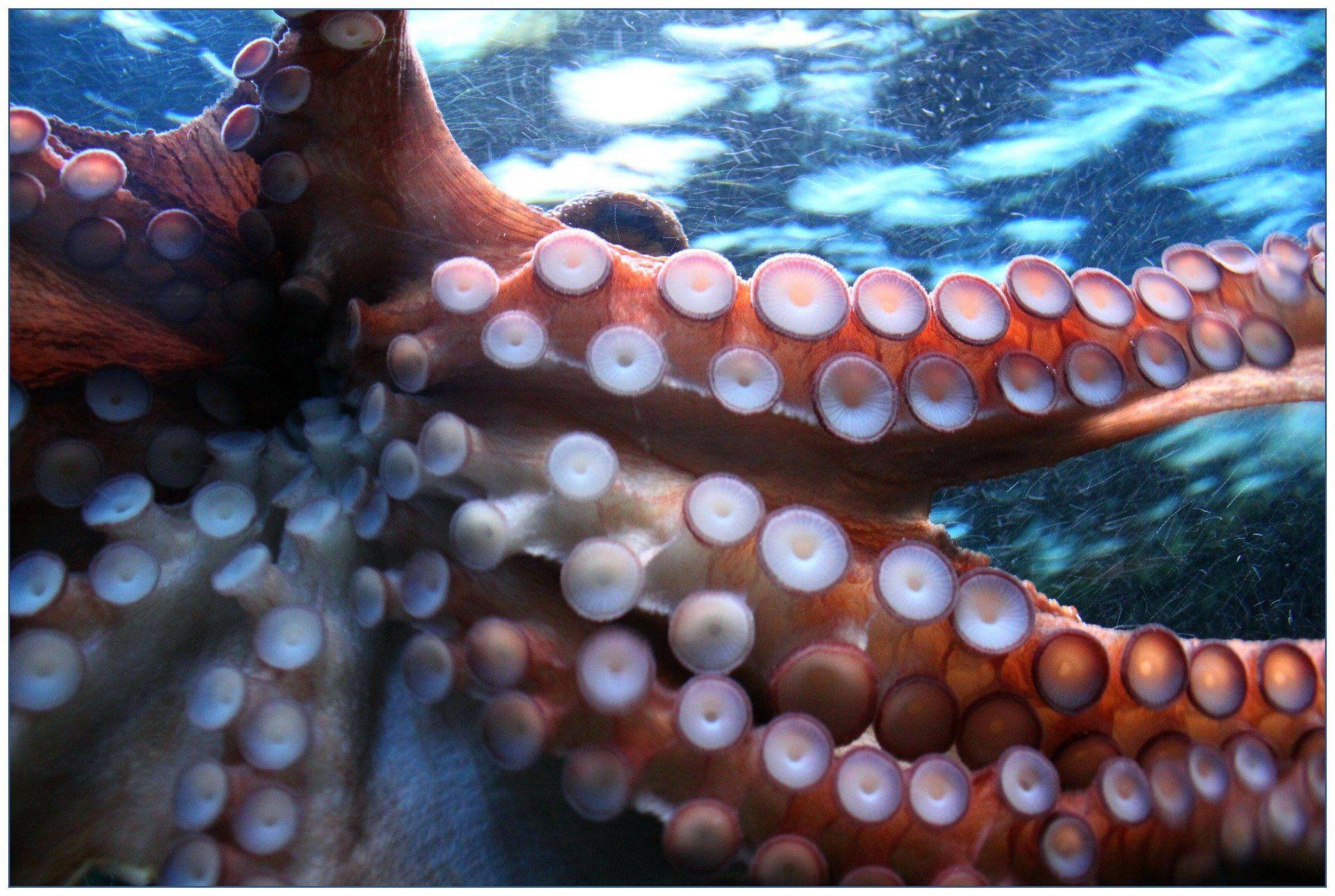Фото морского осьминога бесплатно