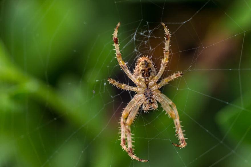 Смотреть фото паука бесплатно