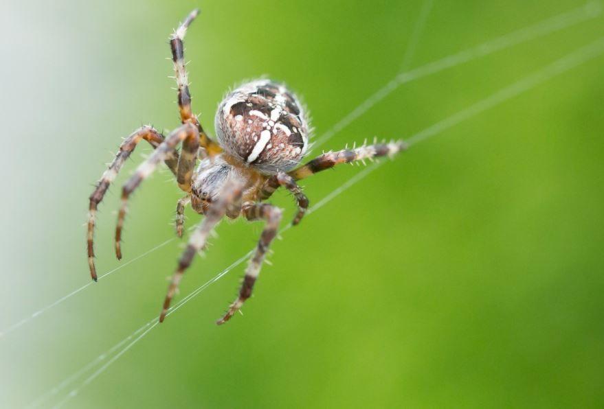 Лучшие картинки паука бесплатно