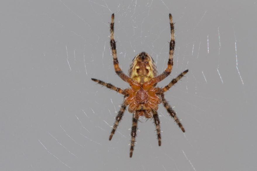 Картинка паука в хорошем качестве