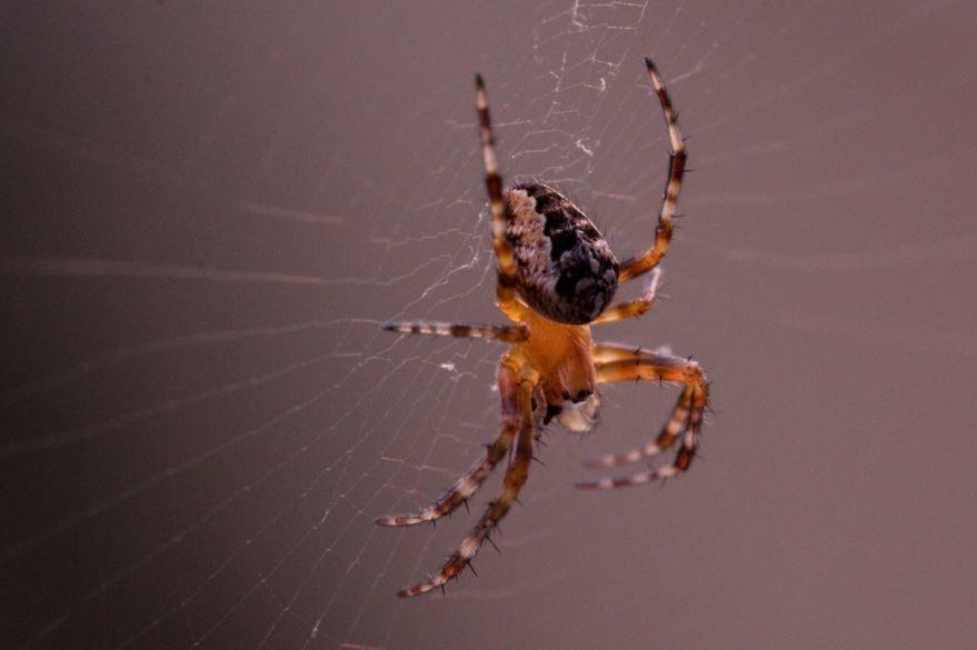 Скачать фотографию паука бесплатно