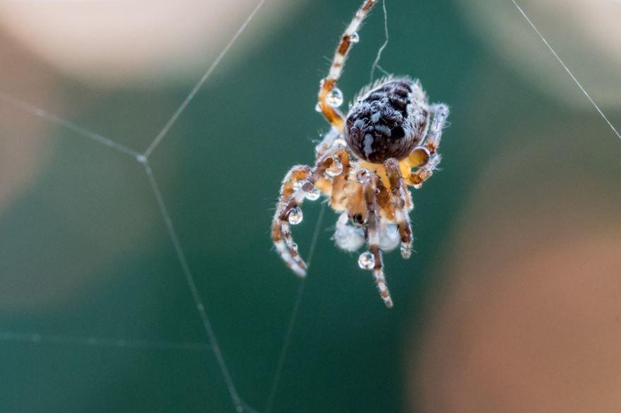 Онлайн скачивание фото паука