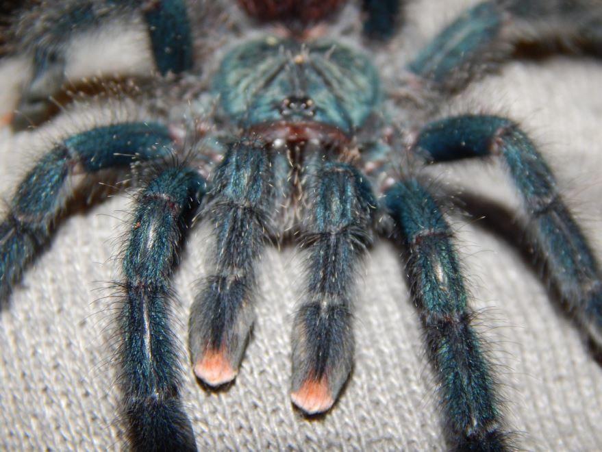 Фото большого ядовитого паука бесплатно