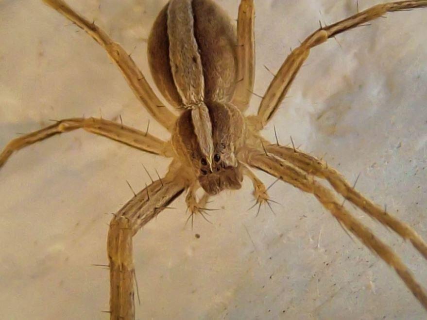 Фото самого большого паука в мире