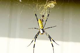 Фото желтого паука онлайн