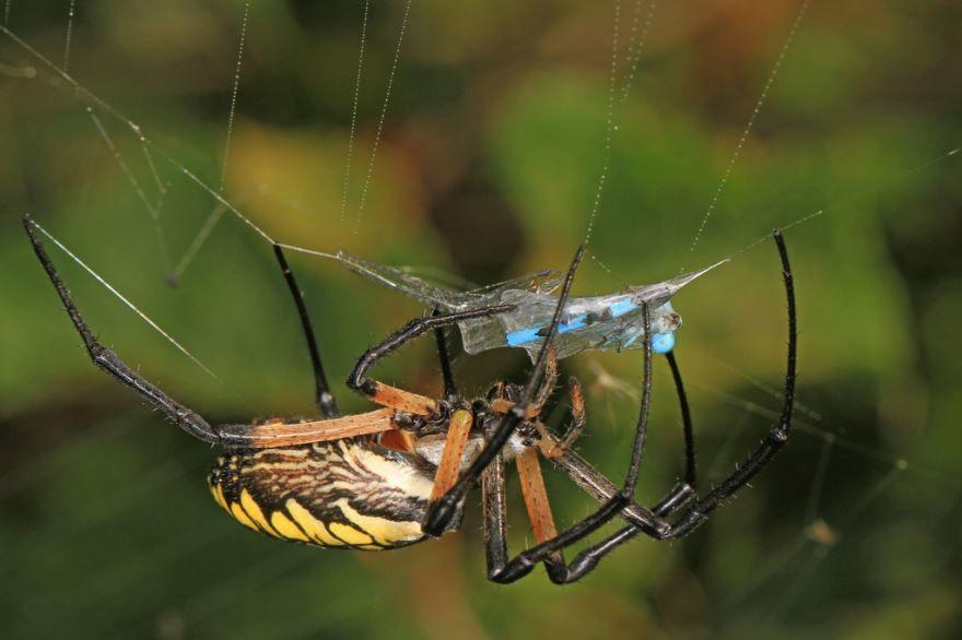 Смотреть черно-желтые фото пауков бесплатно