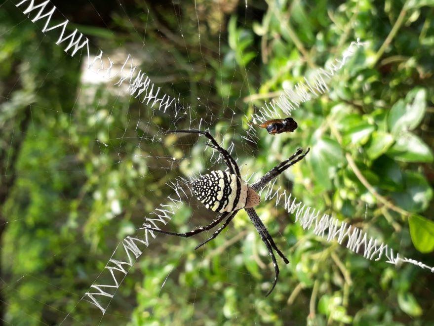 Фотографии белых пауков бесплатно