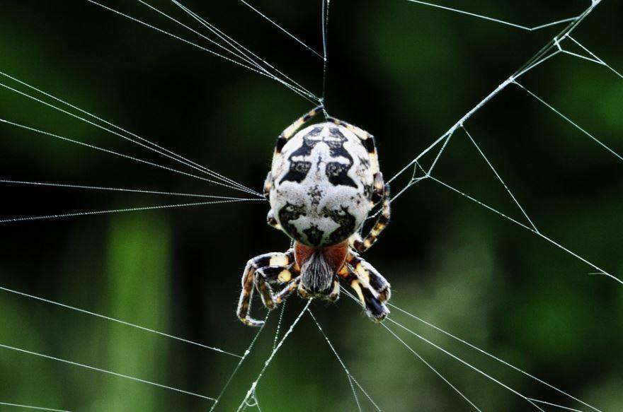 Маленькие белые пауки фото
