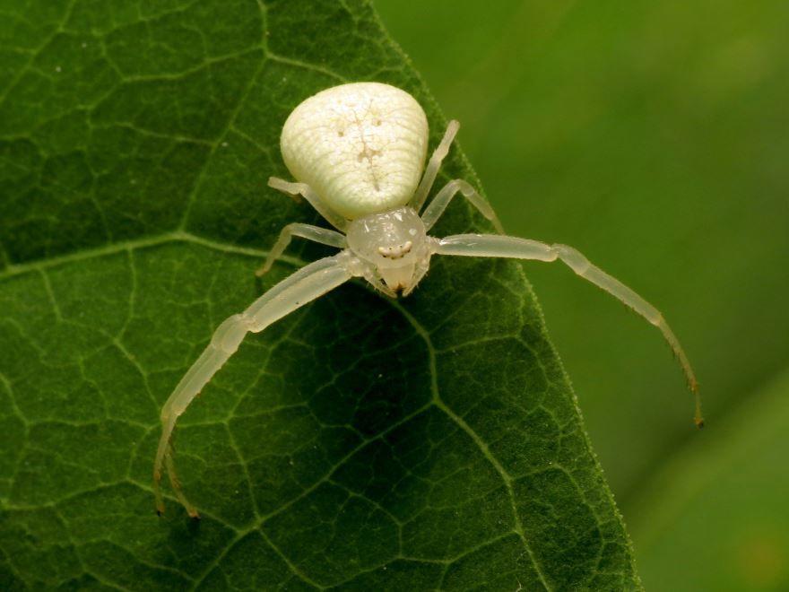 Фотографии паука белого цвета