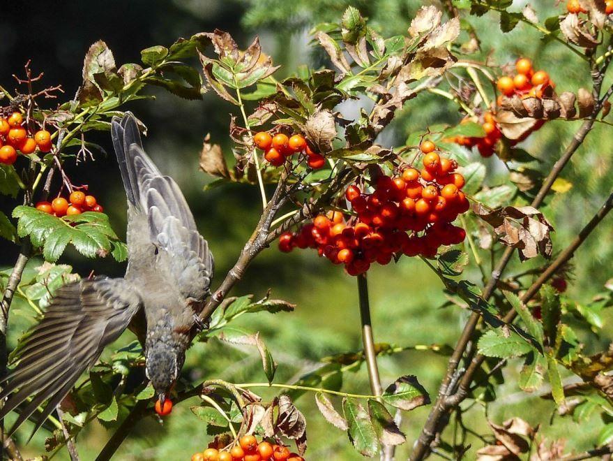 Фото певчей птицы бесплатно