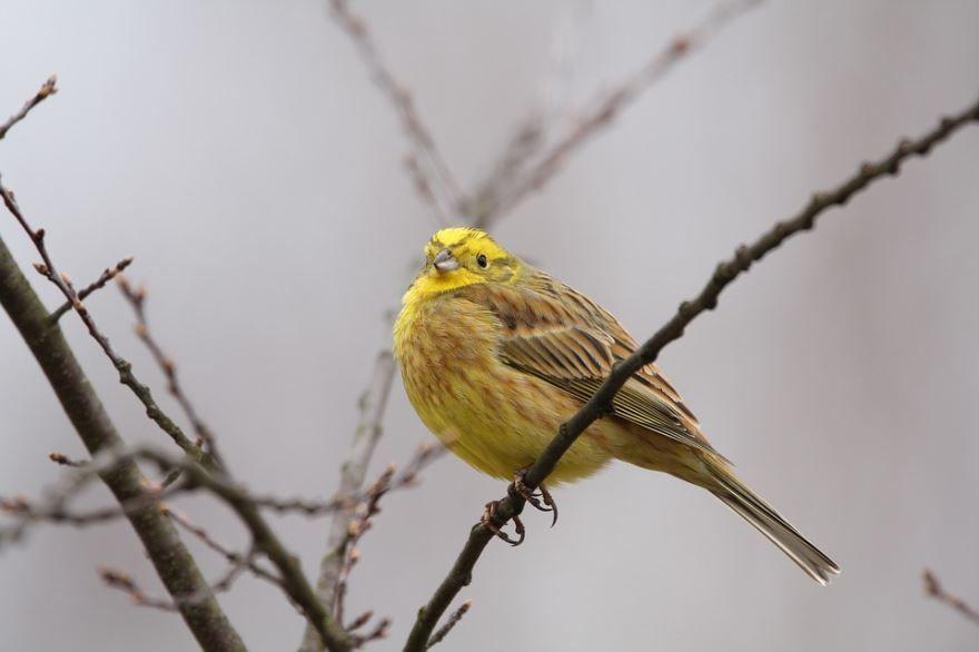 Лучшие фотографии певчей птицы