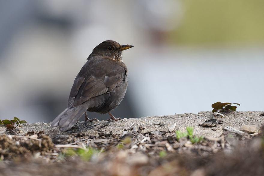 Скачать фото певчей птицы бесплатно