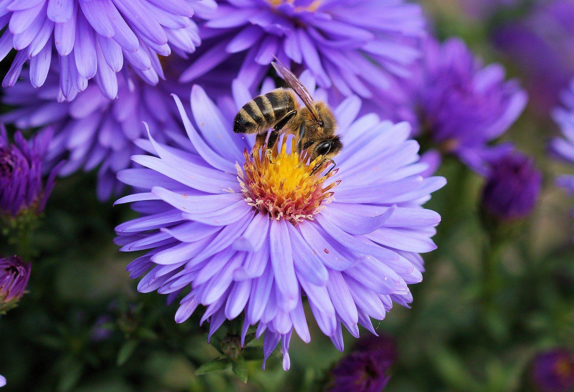 Фото пчелы крупным планом