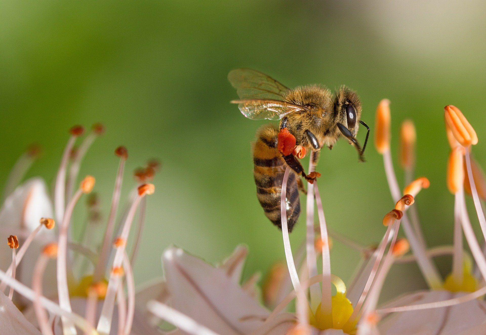 Смотреть фото пчелы онлайн
