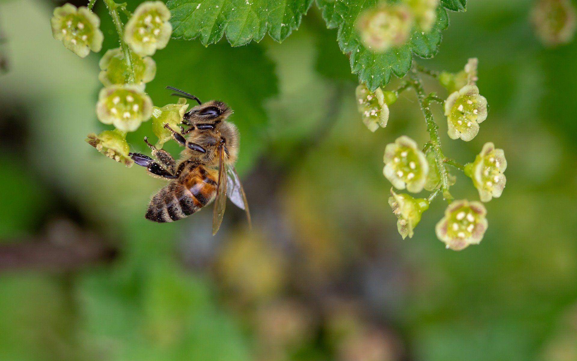 Фото диких пчел, смотреть бесплатно