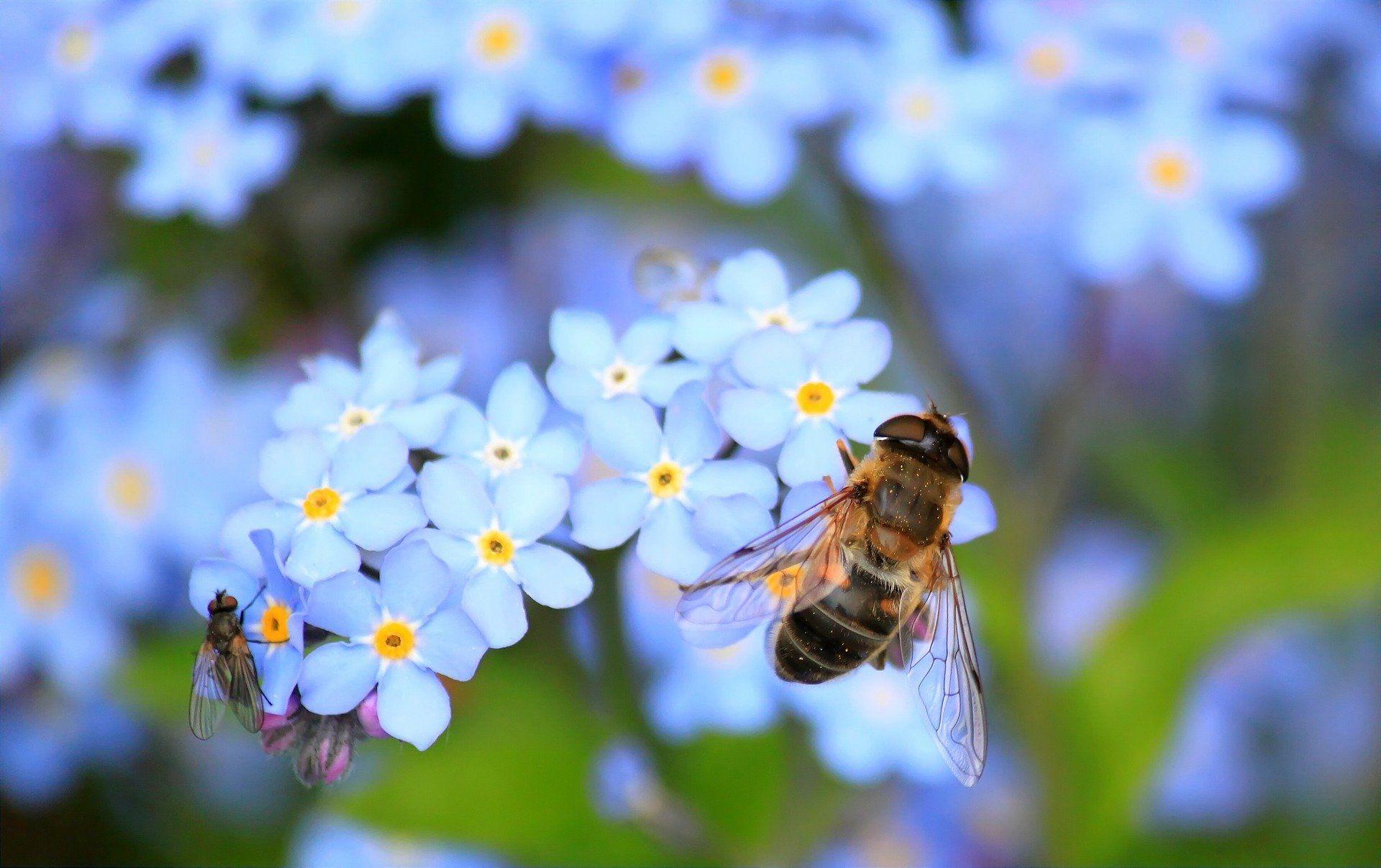 Фото пчелы для тех, кто не видит, как выглядит пчела