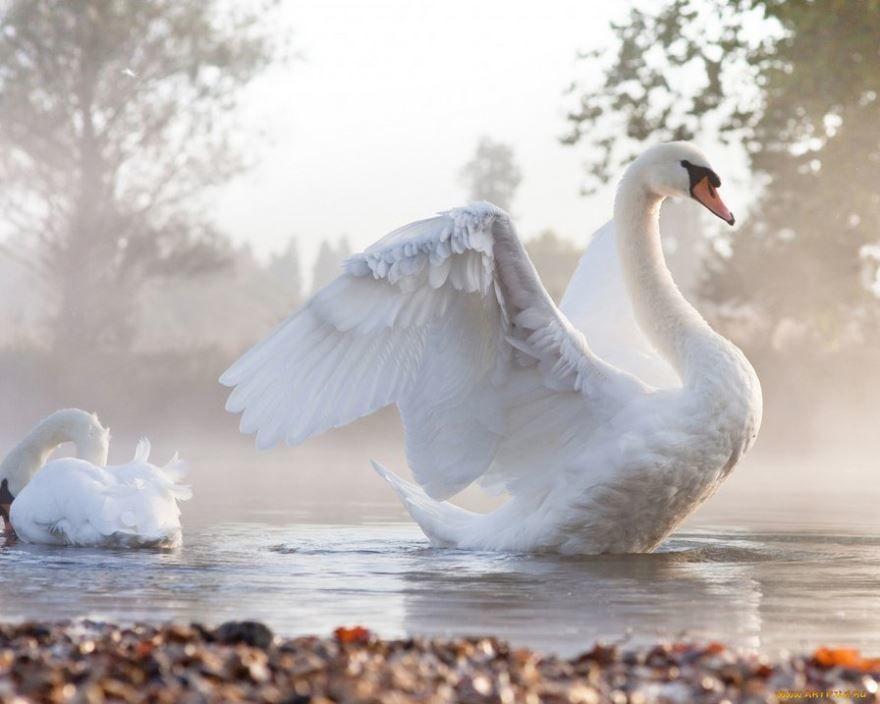Смотреть фото благородной птицы бесплатно