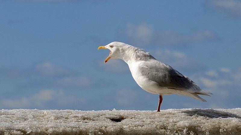 Смотреть интересное фото чайки на берегу