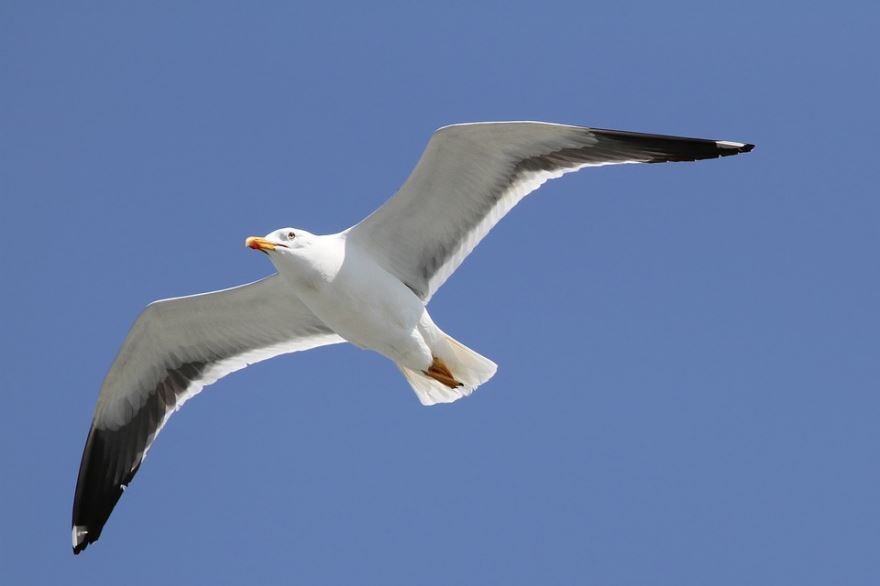 Смотреть интересное фото чайка в небе