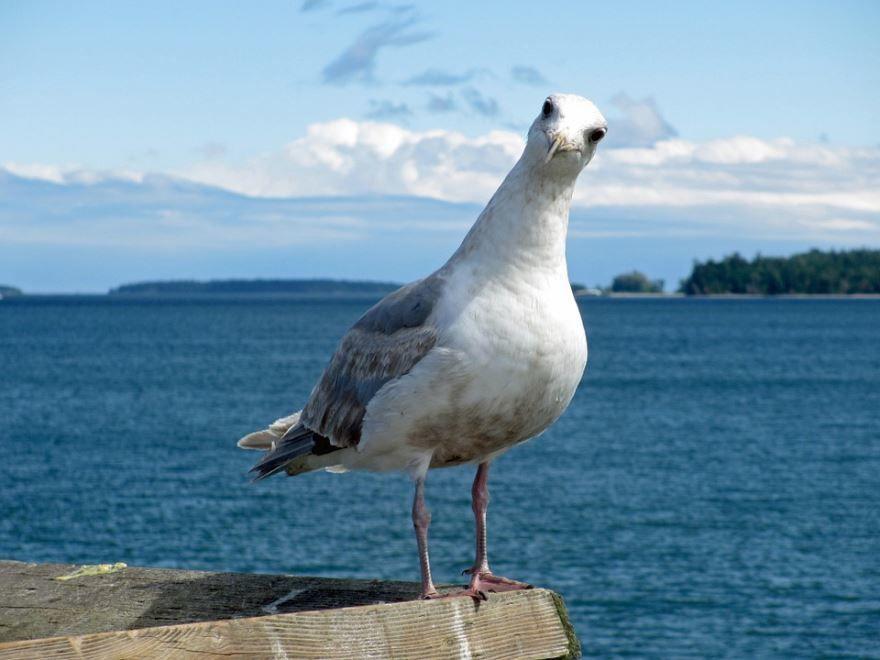 Смотреть лучшее фото чайка на фоне моря