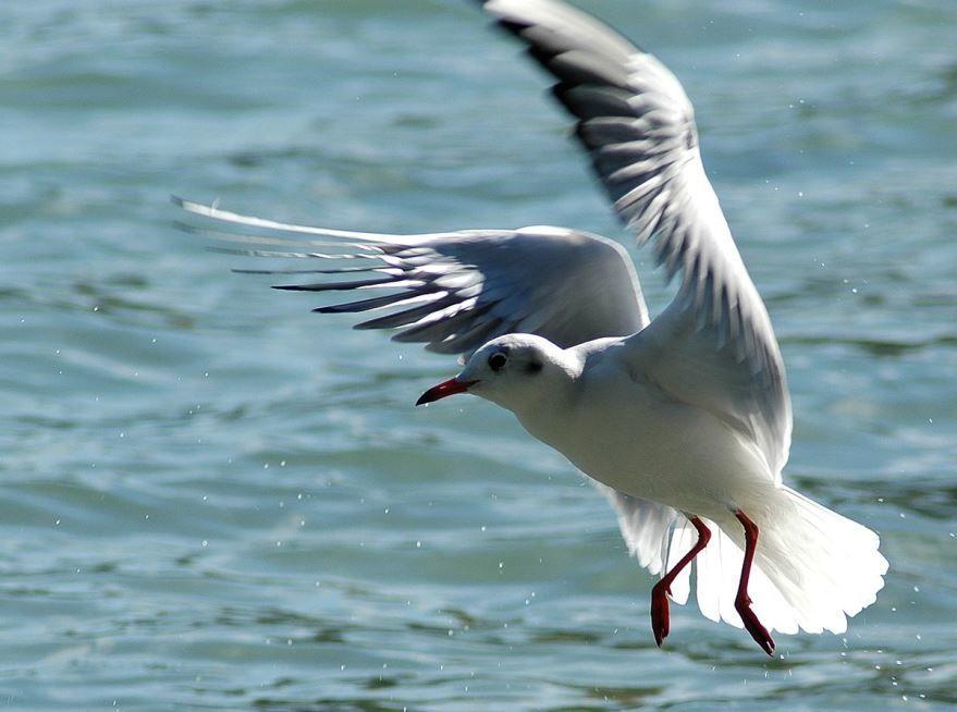 Смотреть лучшее фото чайка взлетает над морем