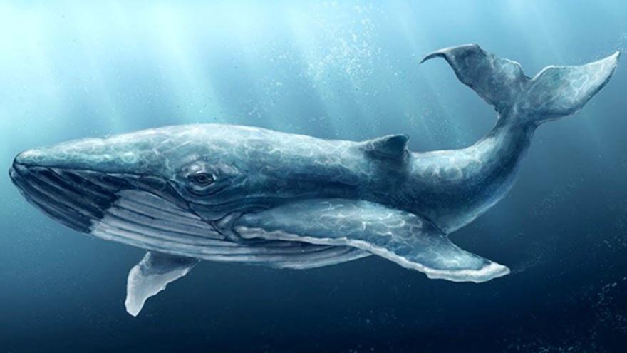 Смотреть красивое фото кита крупным планом