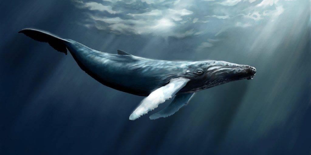 Смотреть красивую картинку кит в глубинах моря