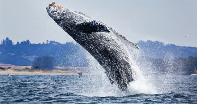 Скачать бесплатно лучшее фото кита над водой