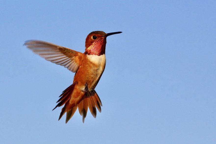 Смотреть оригинальное фото зеленой колибри