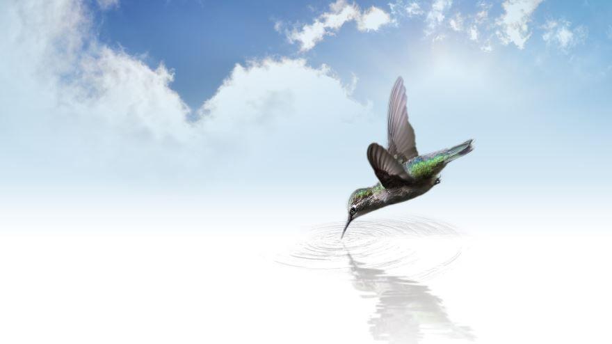 Скачать онлайн бесплатно красивую картинку колибри около цветка