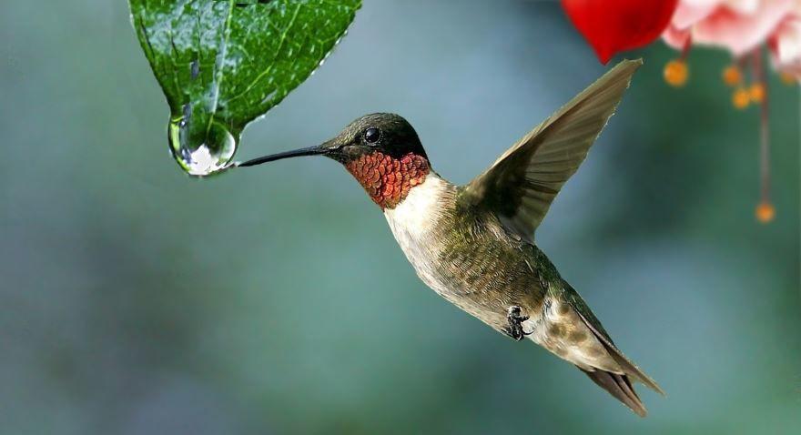 Смотреть красивое фото синей колибри в хорошем качестве бесплатно