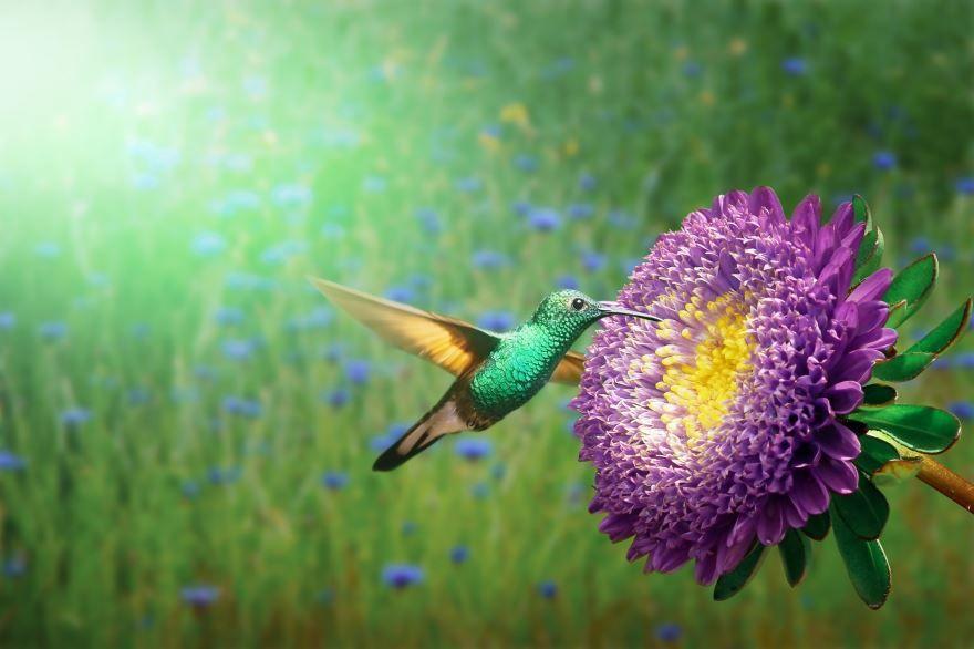 Смотреть лучшее фото красивой птицы колибри