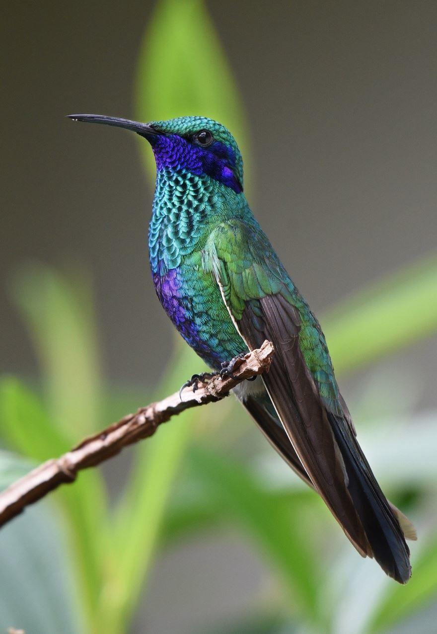 Скачать красивую картинку колибри