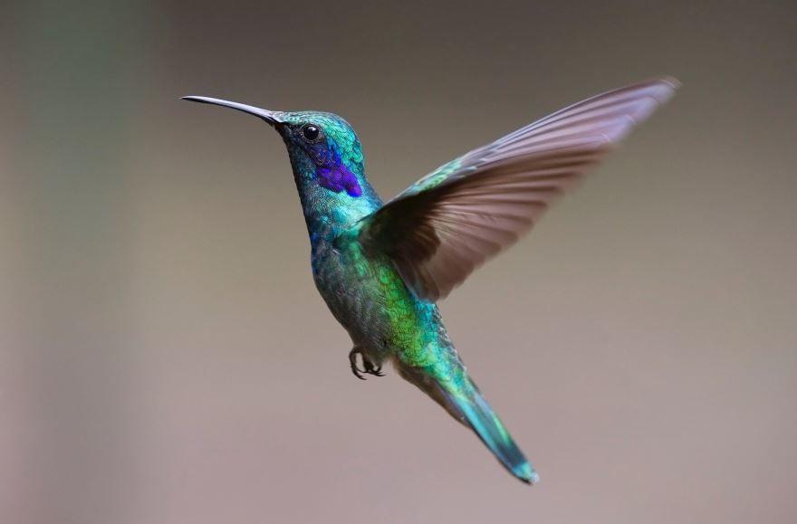 Смотреть красивую картинку колибри в живой природе