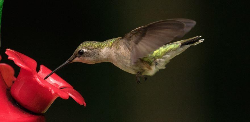 Смотреть оригинальное фото колибри в полете