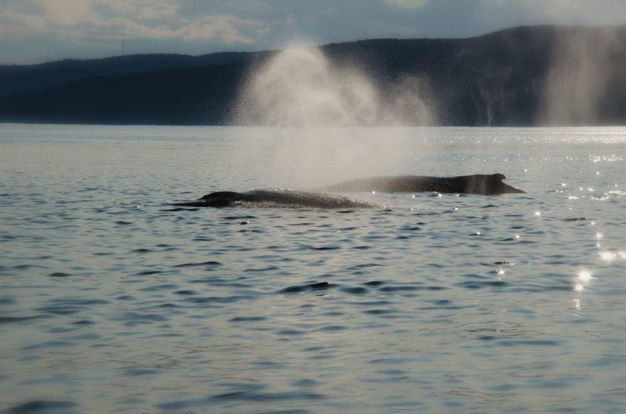 Смотреть лучшее фото двух синих китов в хорошем качестве бесплатно