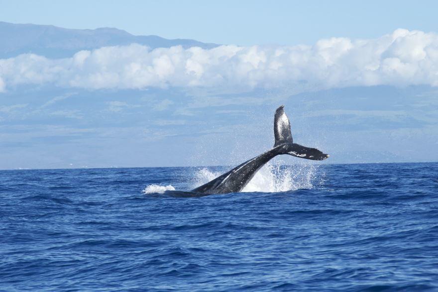 Скачать онлайн бесплатно лучшую картинку синего кита в хорошем качестве