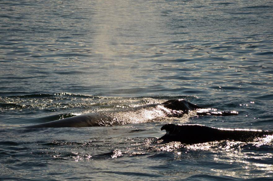 Смотреть оригинальное фото синего кита в среде обитания
