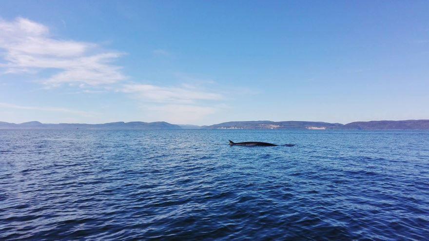 Смотреть фото большого синего кита бесплатно