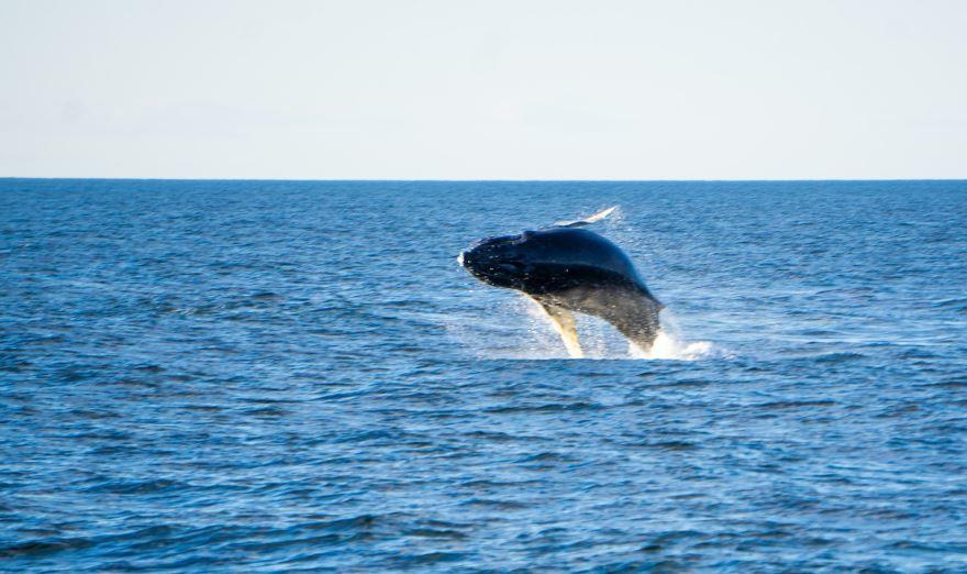 Скачать бесплатно красивую картинку большого синего кита