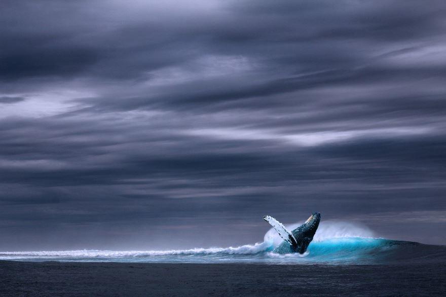 Смотреть интересное фото синего кита в глубинах моря