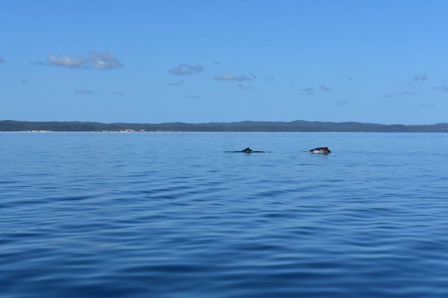 Смотреть лучшее фото синих китов