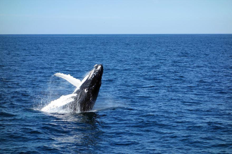 Смотреть оригинальное фото большого синего кита