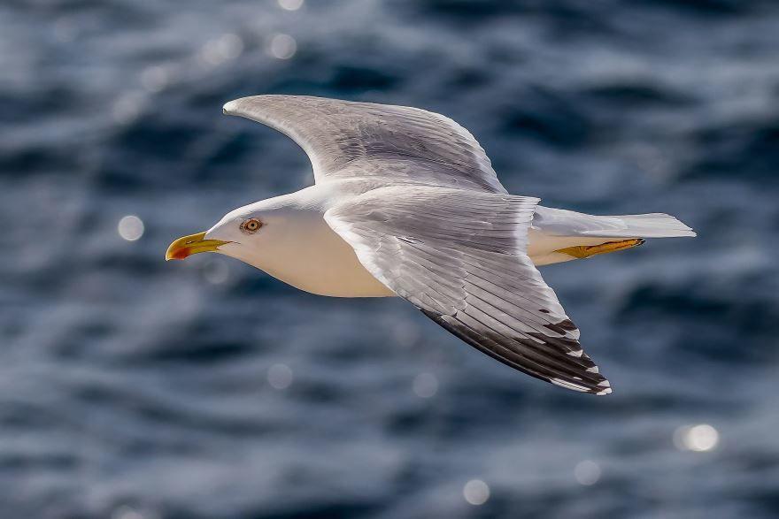 Смотреть оригинальное фото чайка взлетает над водой