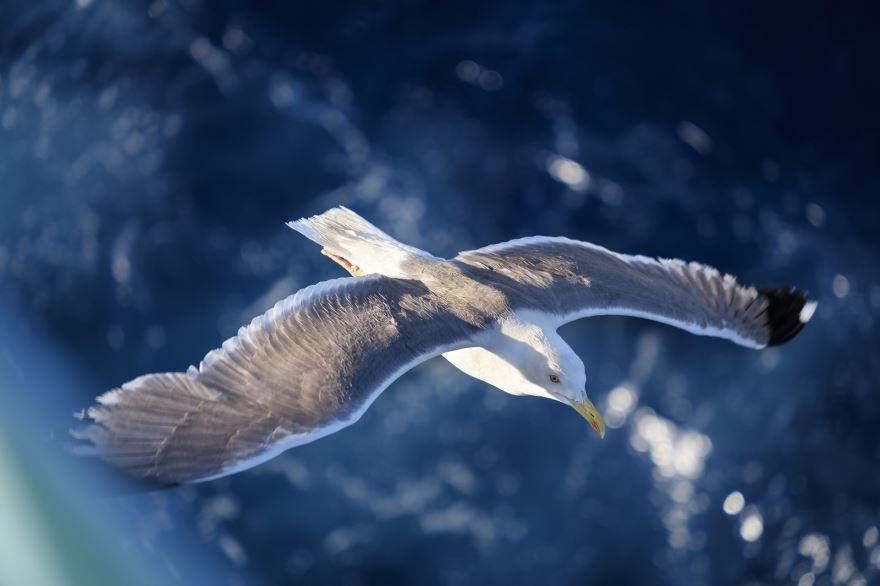 Скачать бесплатно красивую картинку две чайки на природе