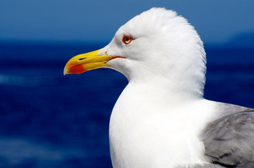 Смотреть лучшее фото чайка кричит